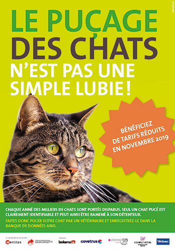 action puce chat 2019